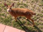 this fawn was born on our property