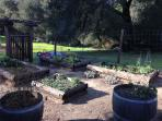 Maintained for our guests, this kitchen garden often offers, fresh greens, herbs, grapes, lemons, ++