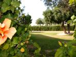 Villa 81 - Set on 2 plots of land, with a pretty orchard attached