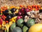 Fruits and vegetables in our garden for you to enjoy
