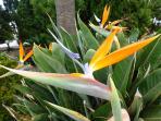 Las flores de Casa José Manuel
