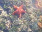 you can enjoy the sea creatures.