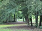 La promenade dans le parc