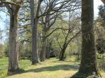 L'Allée des Chênes vers les espaces Zen et Tilleuls.