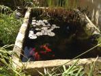Goldfish pond