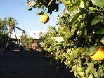 naranjeros y huerto ecológico