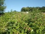 Serre sur la colline au dessus de notre plantation de petits fruits
