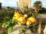 Cedri e limoni di VillaGaffe