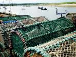 Amble Harbourside Lobster Pots