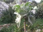 giardino mediterraneo (particolare)