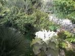 giardino con piante e arbusti mediterranei .Kalanchoe gigante in primo piano (particolare)