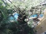 View from main balcony, looking down onto pool area and bay an tree