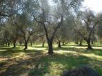 Olive groves abound nearby, perfect for walking or cycling