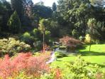 Japanese Gardens, Powerscourt