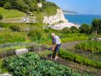 Cliff Top Allotments