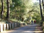 avec surtout des pistes cyclables en pleine forêt des Landes : l'été, c'est que du bonheur