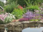 Enjoy our garden full of shrubs, perennials and wildlife friendly plants.