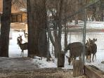 Picture of a herd of deer in downtown Ruidoso.