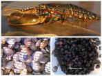 Séjour gourmand avec les poissons, homards , coquillages et crustacés de la côte de Ploumanach