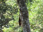 Malabar squirrel spotted at site