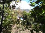 Campo con árboles recinto privado