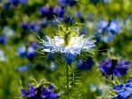 Blumen- zu jeder Jahreszeit ein besonders Highlight.