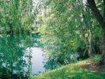 Duck pond and Weeping Willows