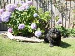 Alfie on holiday at Garden Cottage