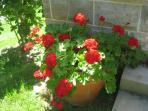 Always plenty of colour in this  delightful garden