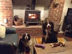 Rory and Billy invite you to join them in the warm and cosy, pet friendly living room.