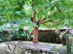 Jardín exterior con mesa y barbacoa.