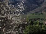 Vista dalla Terrazza di Villa Albizi
