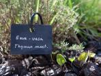 Garden - aromatic and medicinal plants