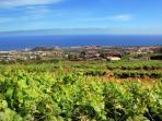 Our vineyards in the Valle de la Orotava