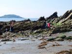 Rockpooling right on your doorstep