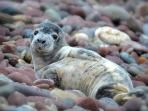 Cecil the seal cub on our beach