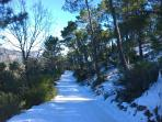 Alrededores nevados en invierno. Camino forestal a Riopar.