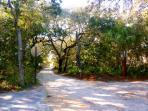 Shady Lanes of Seagrove