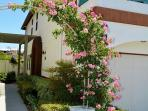 Beautiful foliage adorning walkways