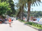 Palm-lined promenade