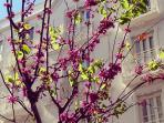 Primavera en el barrio de Ruzafa
