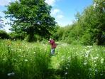 Wild flower area on our nature reserve. This has an amazing butterfly count record. David`s photos