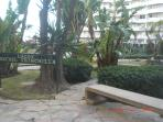 15000 metros cuadrados de jardines tropicales dentro del complejo