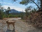 Looking across Helen to Mt Yonah.  Small and well behaved friends can guide your Mountain trail