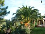 Palm trees near the pool