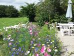 Sit amongst dazzling cornflowers and Cosmos