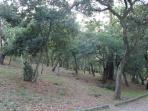 A zona mais selvagem do Parque com árvores centenárias.