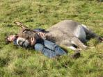 A snooze with a donkey, cool!