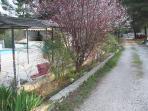 jardin et piscine selon la saison