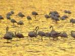 Flamingo's on reserve